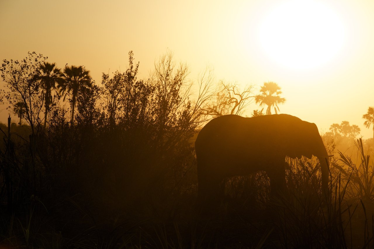 Sunset with elephant's silhouette