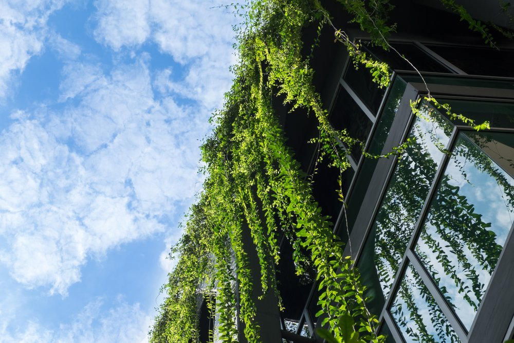 What Is Biophilic Design and Why Should You Care