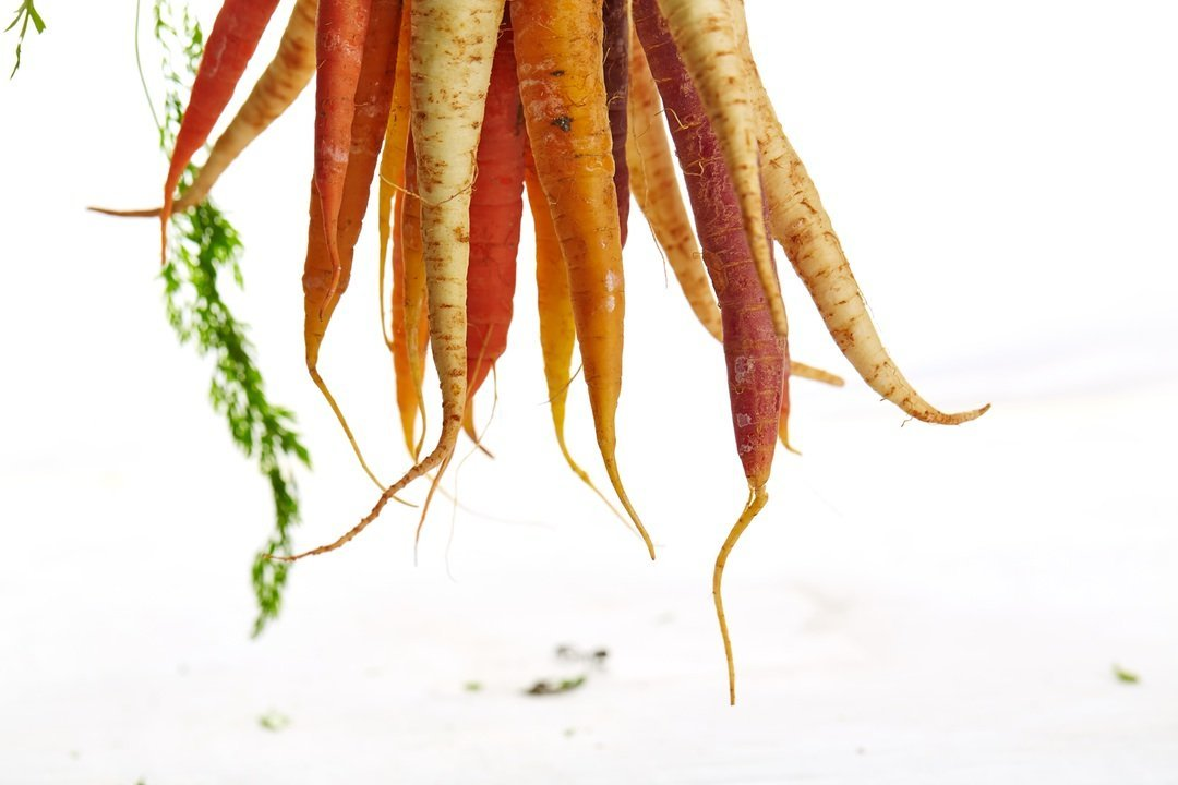 Carrots a healthy vegetable with great benefits