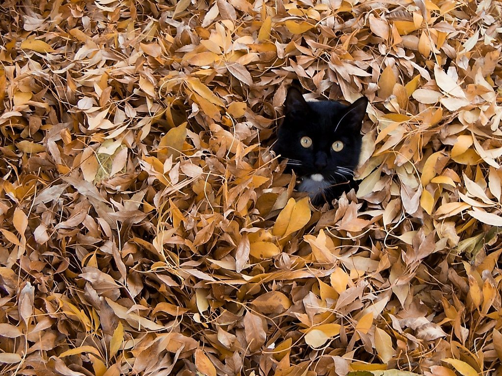 Cat hiding in pile of leaves