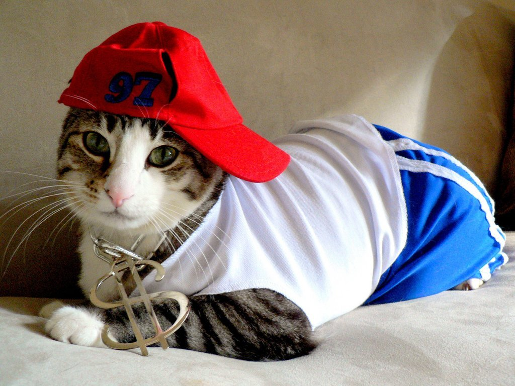 Cat dressed as a rapper