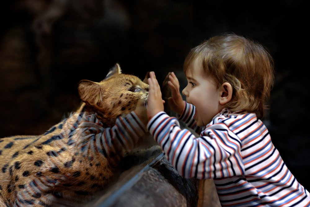 Child and Wildcat at Zoo