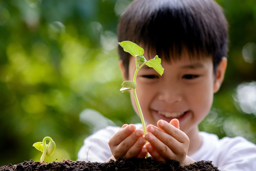 Child Holding Green Seedling in Hands