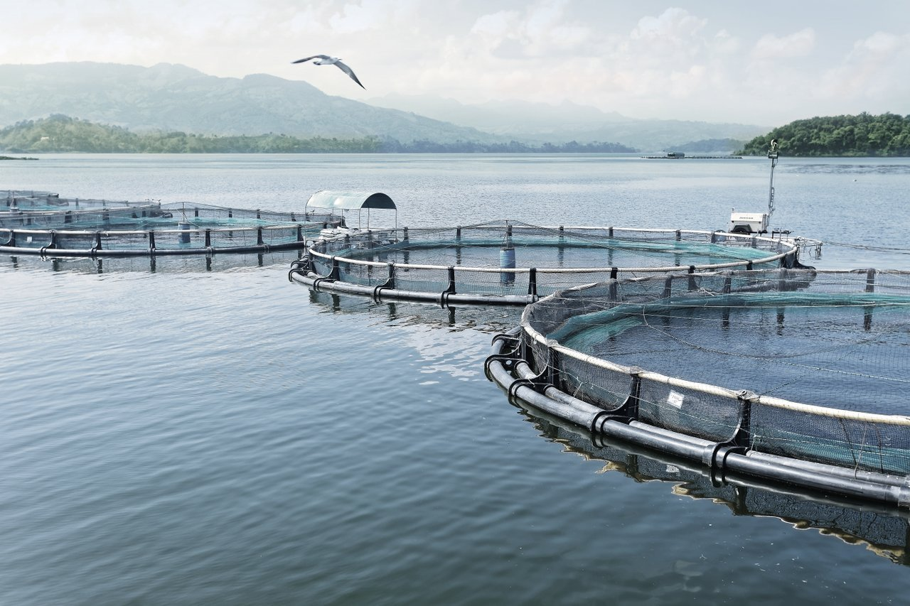 choose responsibly raised fish