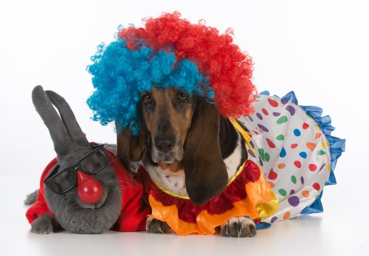 Dog and rabbit dressed as clowns for Halloween