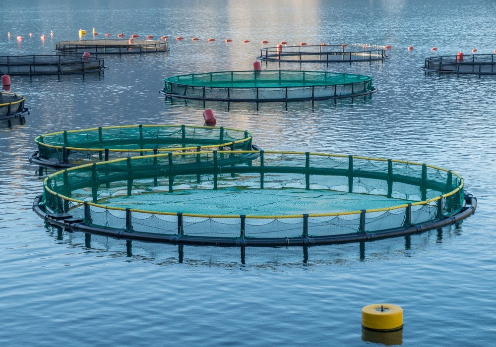 Farming conditions allow fish to grow healthy