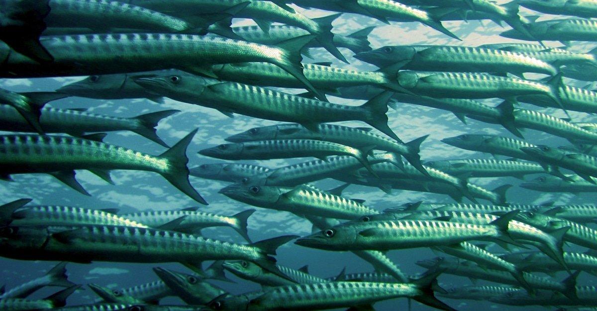 Fish Farm Aquaculture Help Agriculture