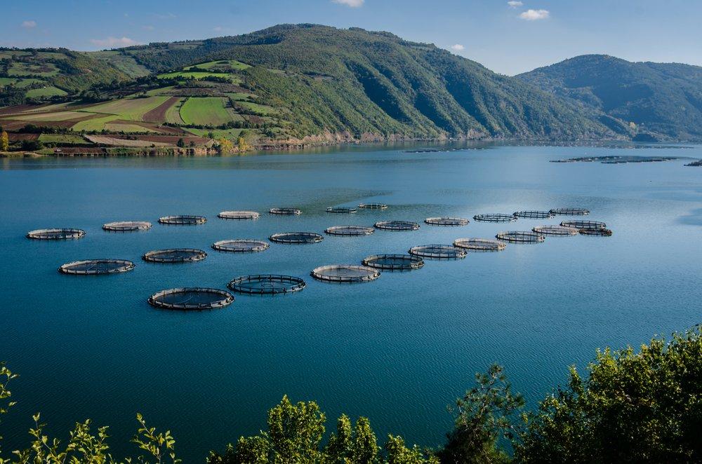 Fish Farm Aquaculture Floating Nets