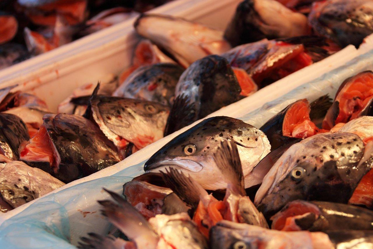 fish heads China
