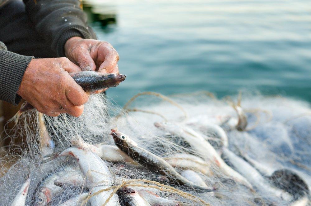 Fishing Net Wild Fish Sustainable