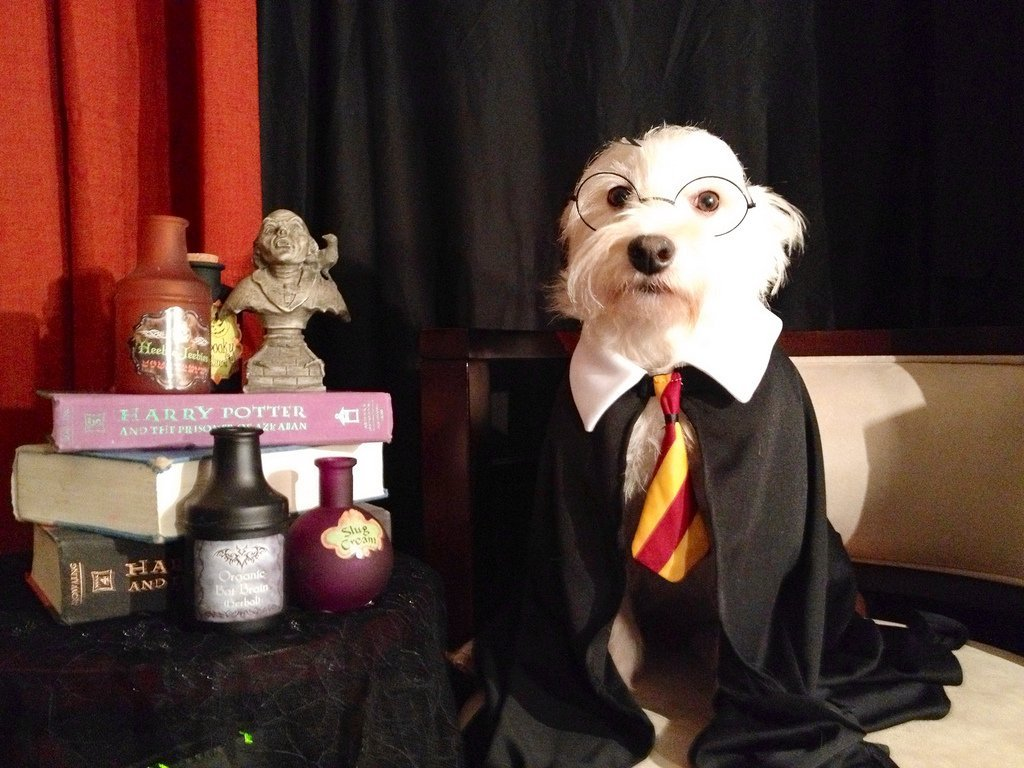 Dog in Harry Potter costume