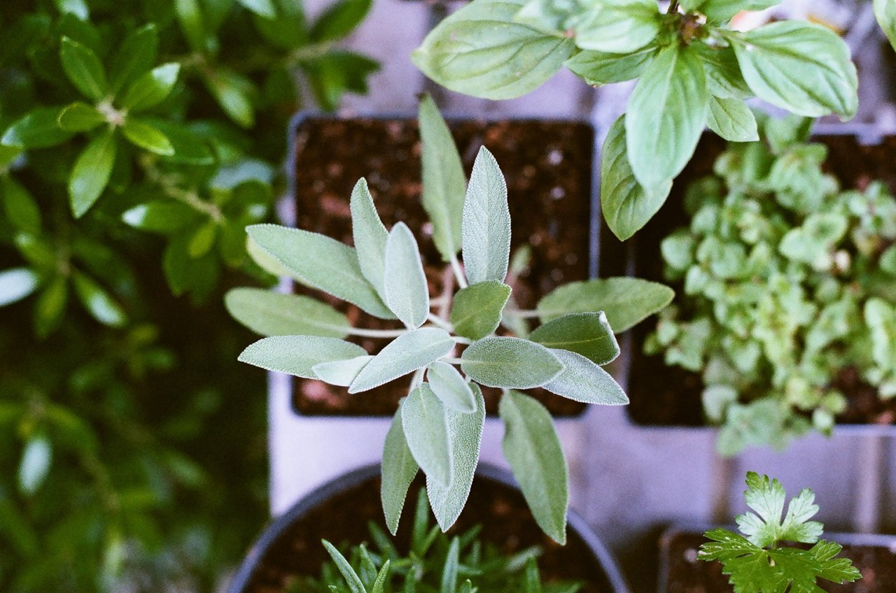 Herbs Essential Oils