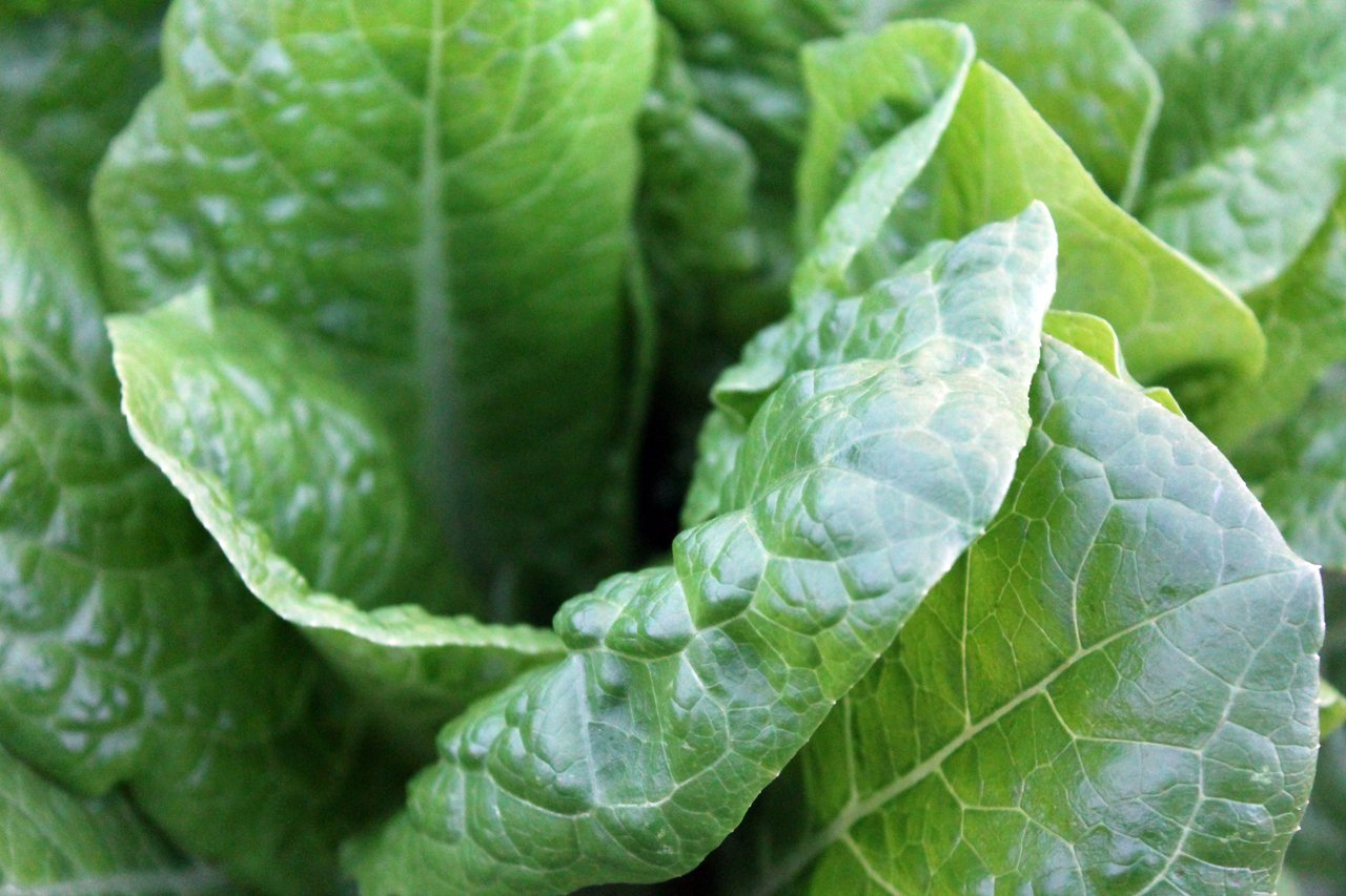 spinach calcium-rich foods green vegetables