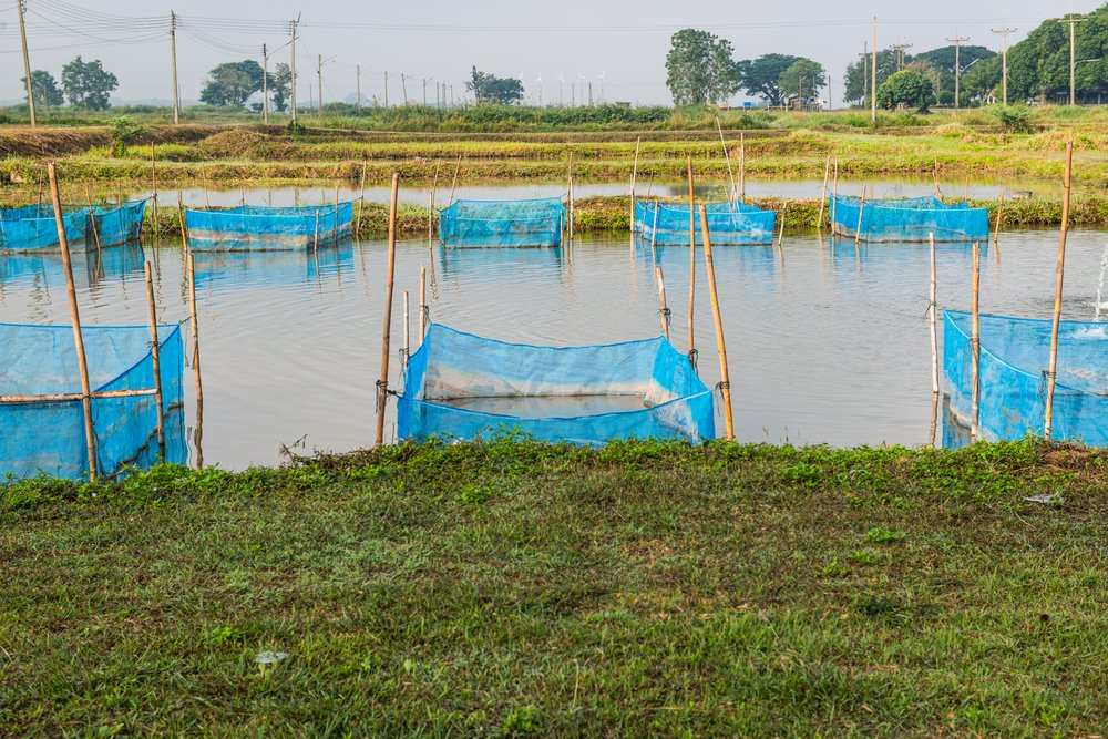 4 Common Methods for Aquaculture - The Healthy Fish