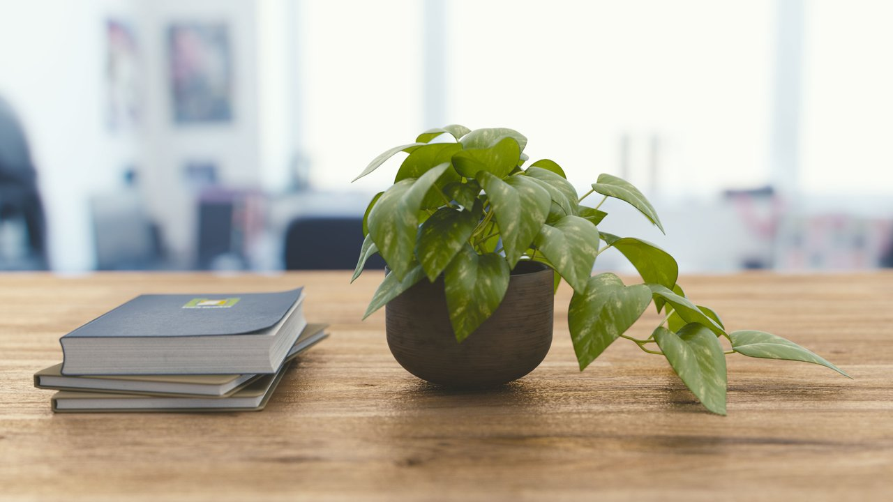 green plant and books on office desk