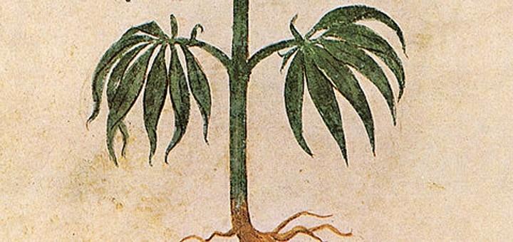 6 Historical Facts About Medicinal Marijuana