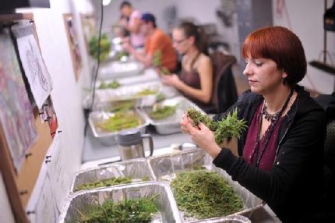 9 Jobs that Legalized Marijuana Would Create