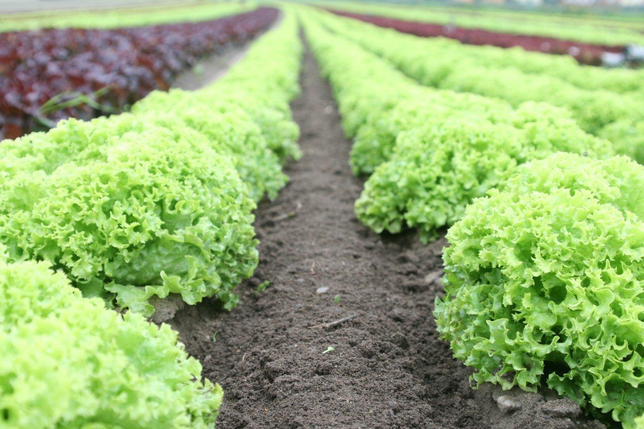 Buy Produce Local Farmers Food Shortage