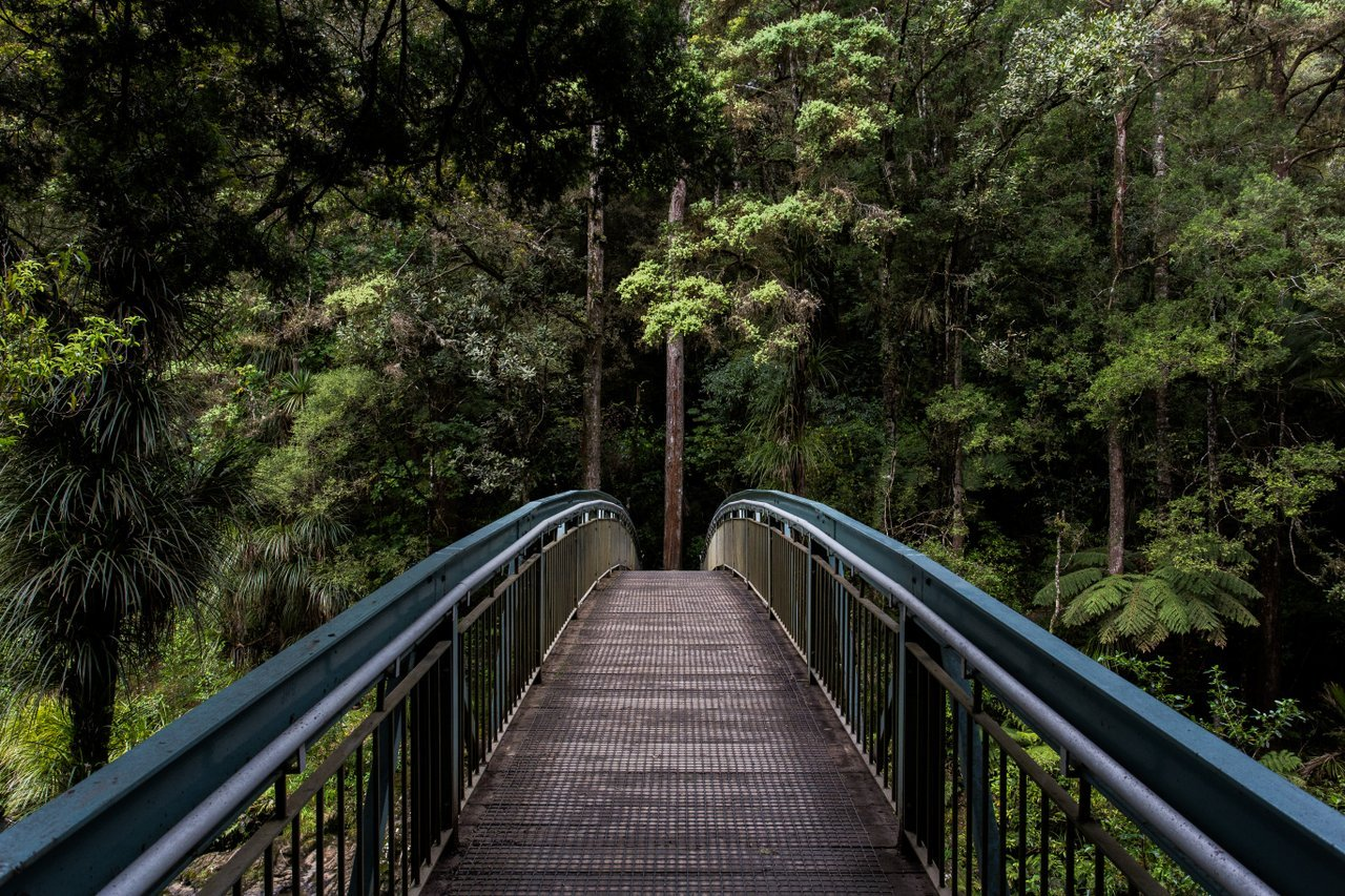 Footbridge in the jungle