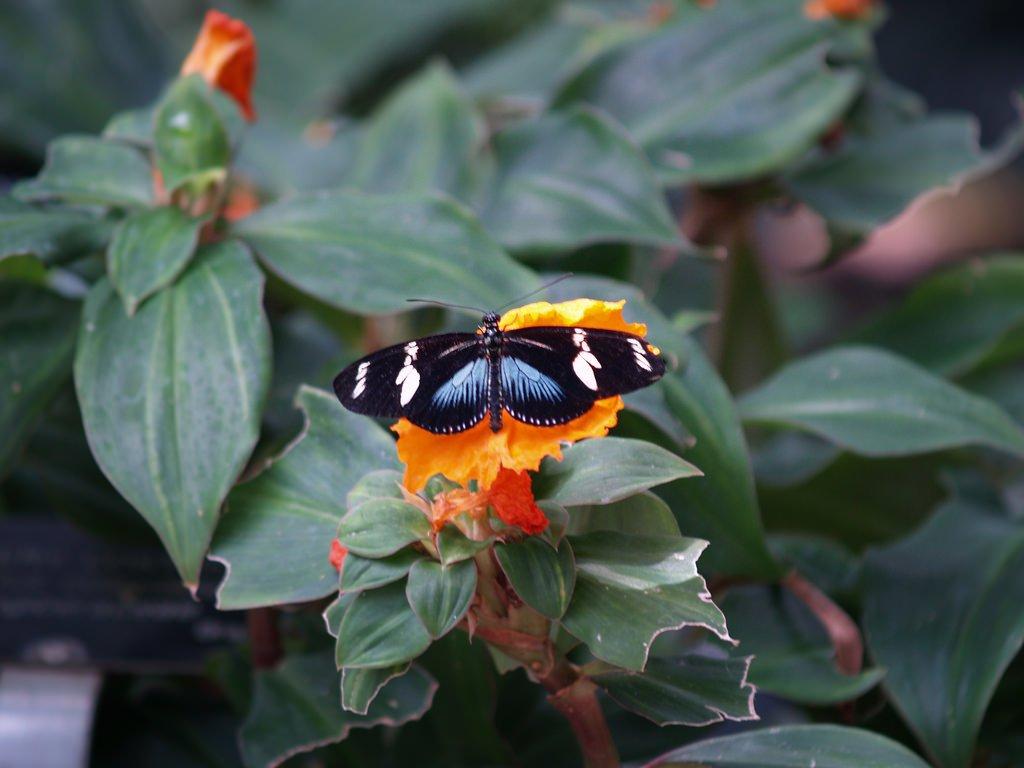 Niagara Butterfly Gardens