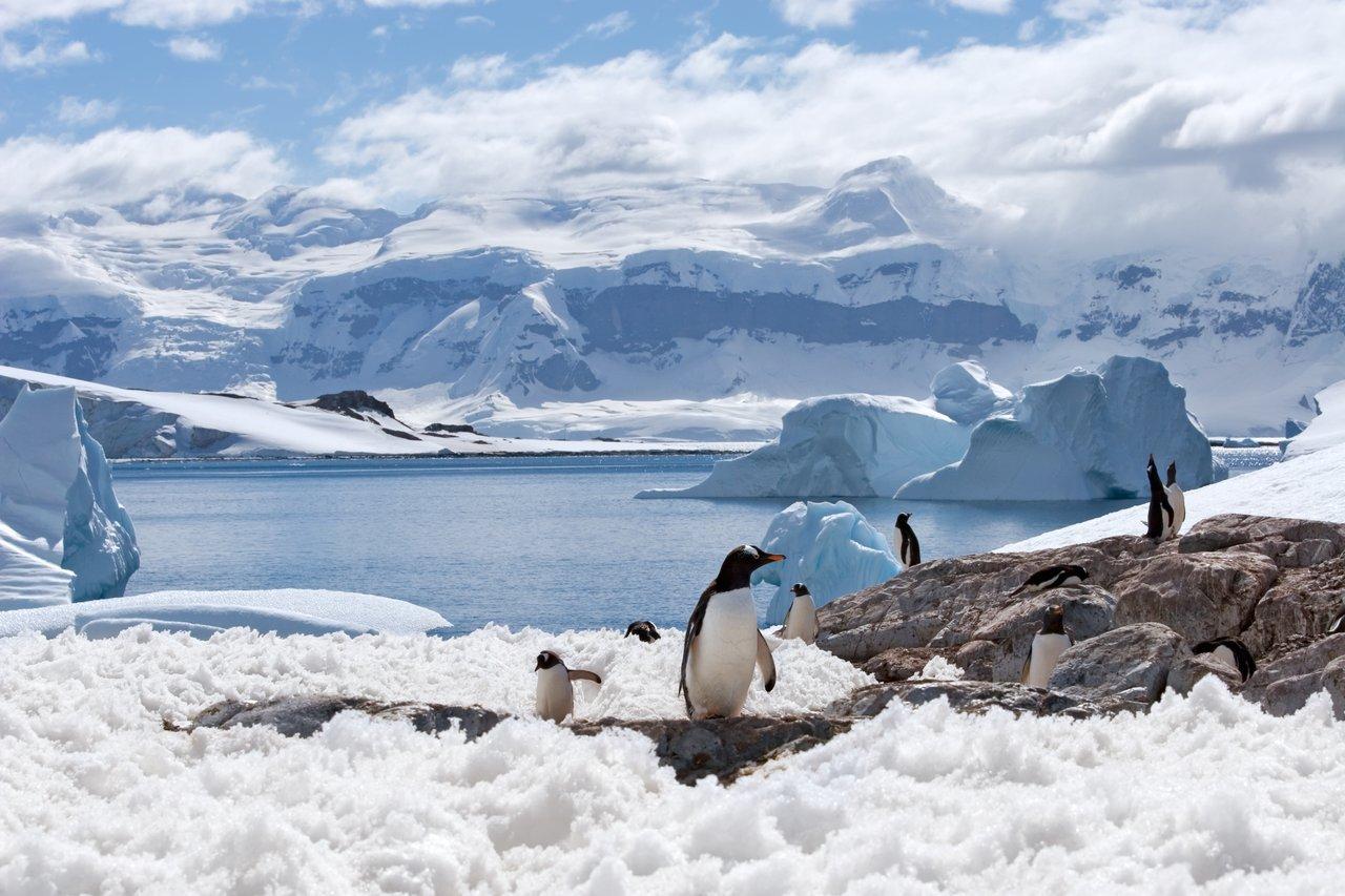 Penguins on land in Antarctica