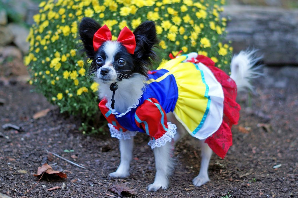 Dog in Snow White costume