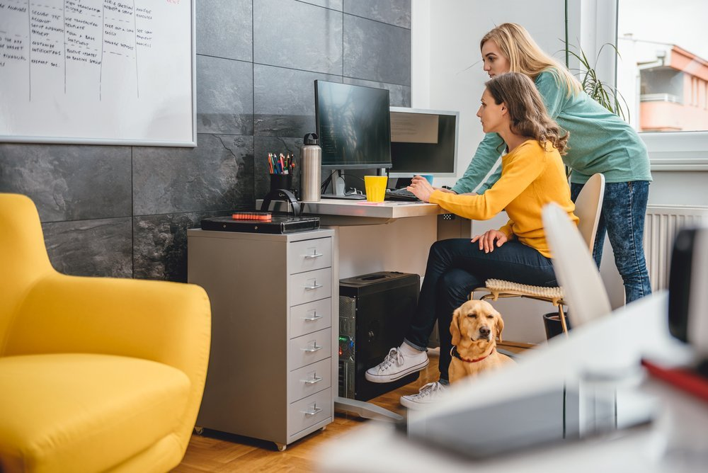 Pets in the office to reduce stress