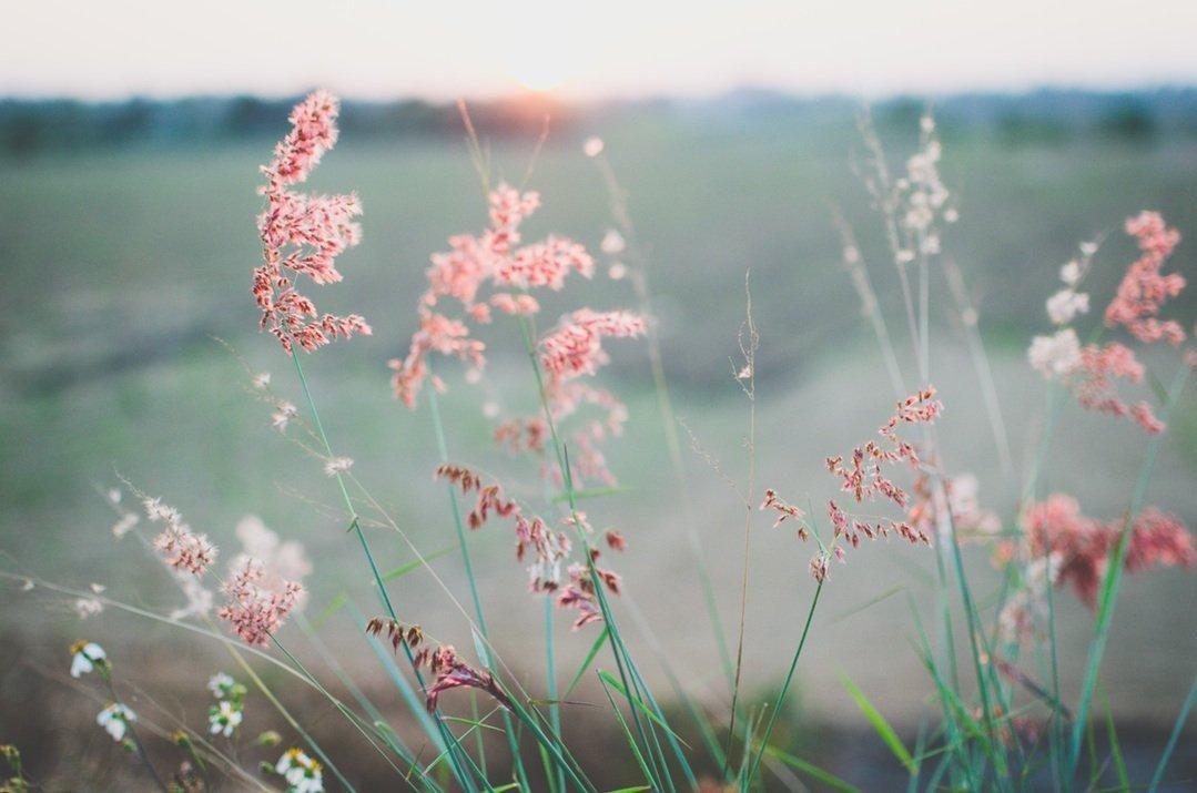 Pink Flower Essential Oils