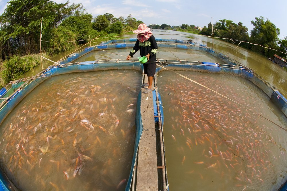 poorly regulated fish farm Thailand