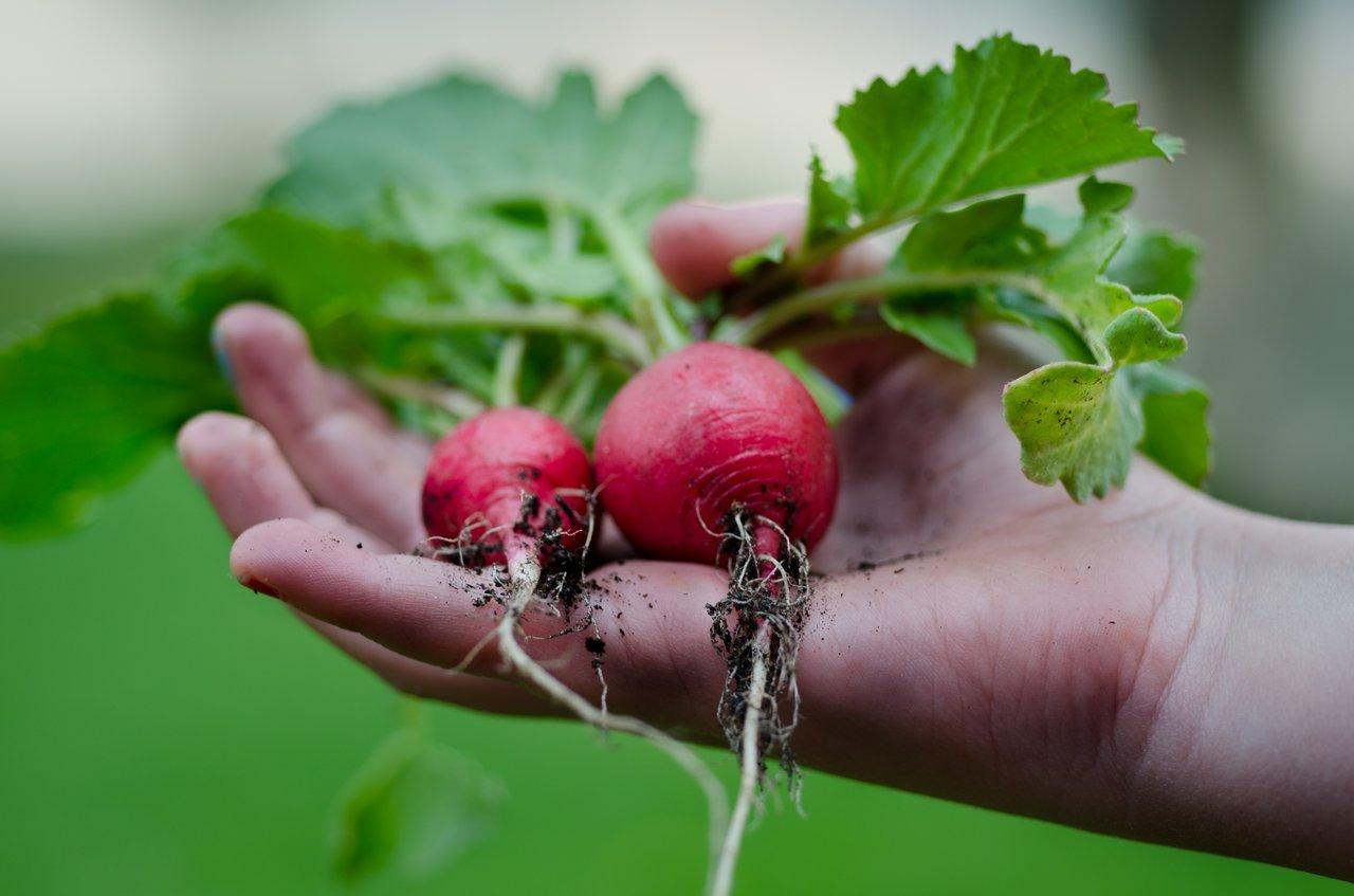 Grow Own Food Help Global Shortage