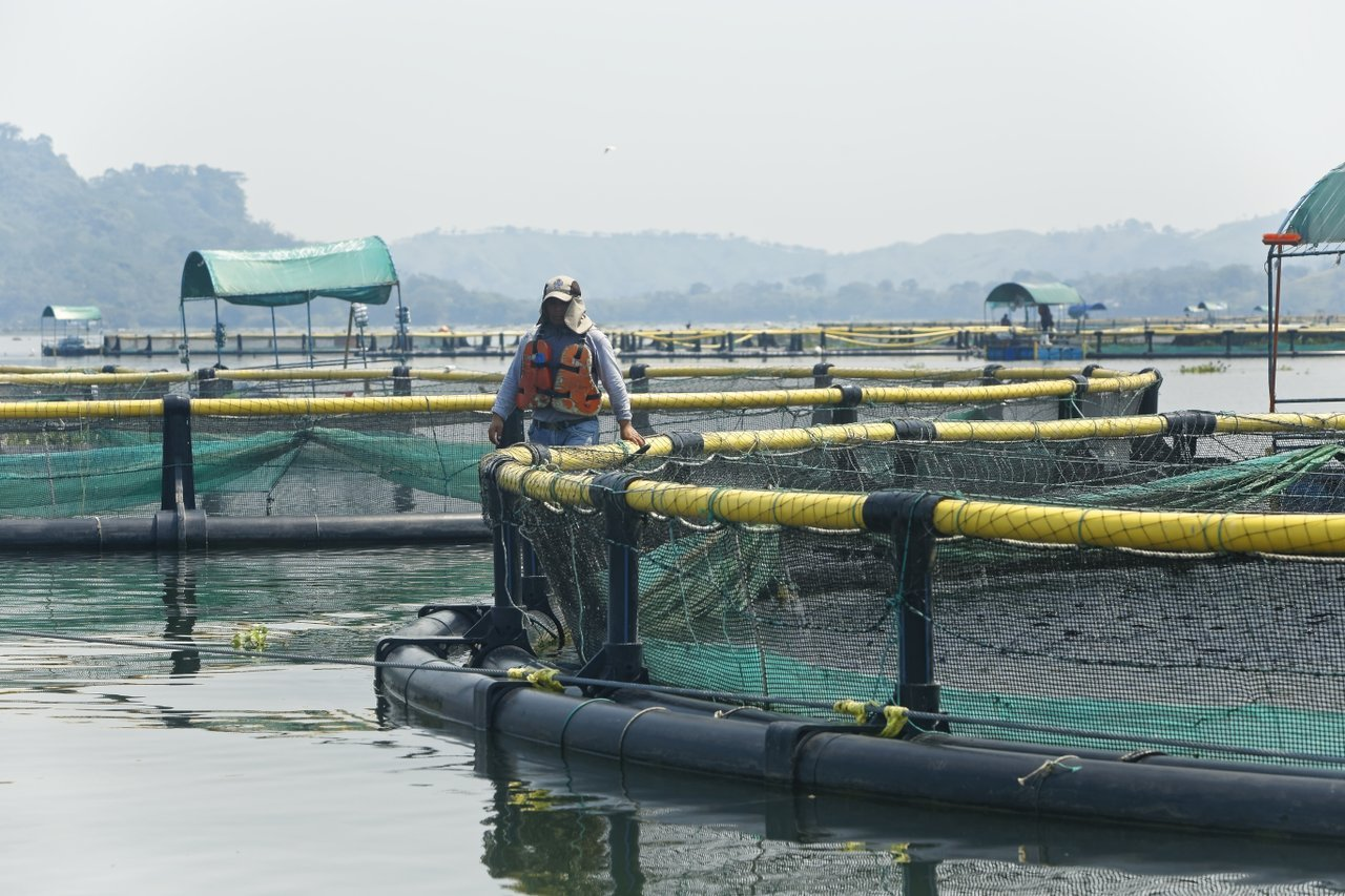 Sustainable aquaculture practices by Regal Springs