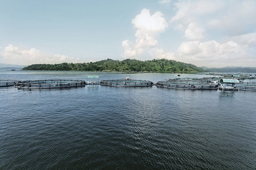 Regal Springs sustainable and ethical tilapia farms