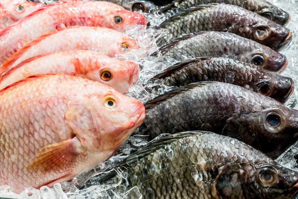 Tilapia Fishmonger Grocery Store Sustainable Ethical