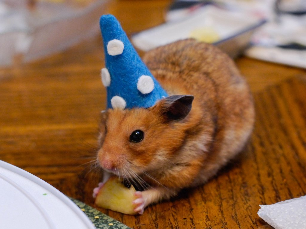 Hamster in wizard hat eating cheese